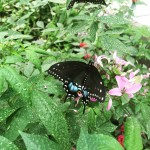 Butterfly at Woodland Park Zoo