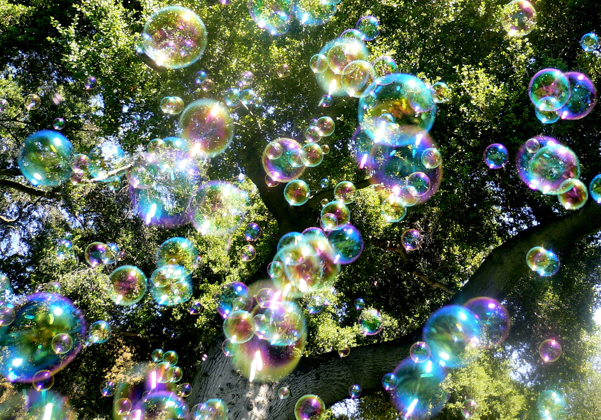 Bubbles in the sunlight