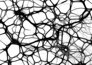 Neurons rendered in black and white