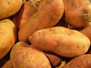 Sweet potatoes, Ipomoea batatas