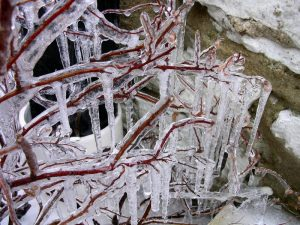 Heavy coverage of icicles on a tree branch