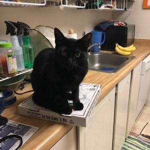 Photo of a black cat sitting on a pizza box.