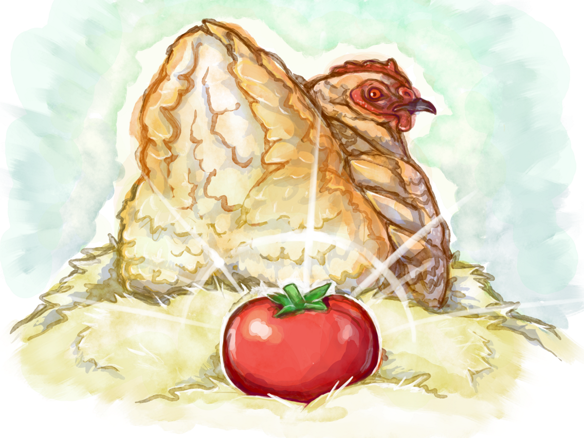 Illustration of a chicken with a freshly laid tomato behind it.