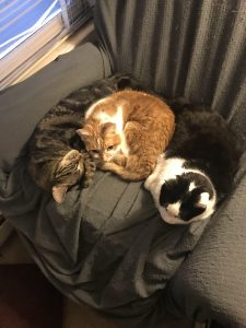 Photo of three cats curled up next to each other.