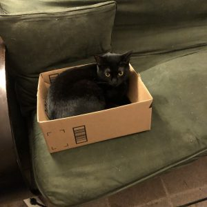 Photo of a black cat sitting in a box.